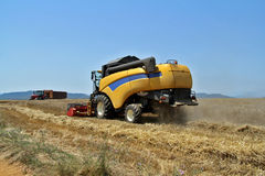 A wheat field in summer harvesting. Harvested wheat a summer day stock photo