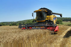 A wheat field in summer harvesting. Harvested wheat a summer day stock photos