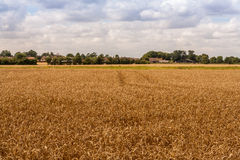 Uk countryside suffolk field Royalty Free Stock Photo