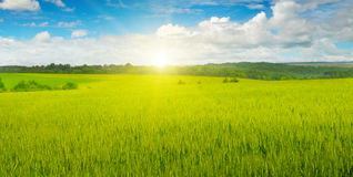 Wheat field and sun in blue sky Royalty Free Stock Images