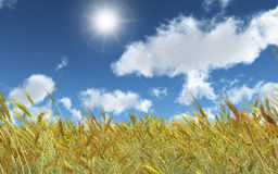 Wheat field on a sunny day. 3D render of a wheat field on a sunny day Stock Photos