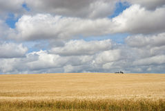 Wheat field on a sunny day Stock Photo