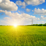 Wheat field and sunrise in the blue sky Royalty Free Stock Photos