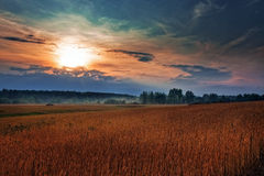 Wheat field on sunset Stock Image