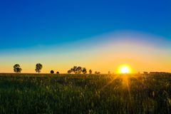 Wheat field at sunset. Stock Images