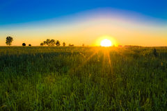 Wheat field at sunset. Stock Photos