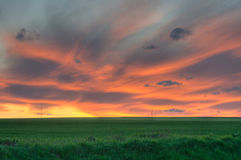 Wheat field sunset. Sunset over a field of wheat in spring royalty free stock image