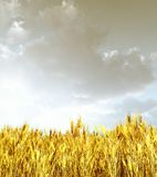 Wheat field in the sunset. 3d image Stock Photography