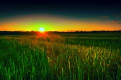Wheat field at sunset, agriculture, landscape stock photos