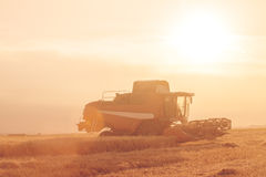 Wheat field at sunset in backlight with a combine harvester in a Stock Photos