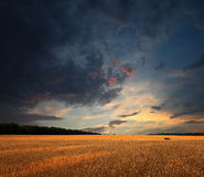 Wheat field and sunset clouds Stock Photos