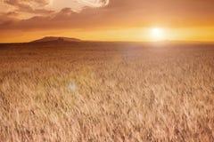 Wheat field at sunset landscape Stock Photo