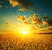 Wheat field at sunset Royalty Free Stock Photos