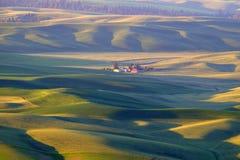 Wheat field sunset Stock Image