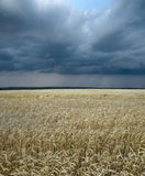 Wheat field and thundercloud Stock Photos