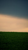 Wheat field and thunderous sky Stock Image