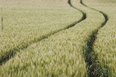 Wheat Field Tracks Royalty Free Stock Photos