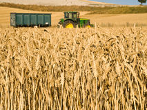 Wheat field and tractor. Typical summer image. Harvesting series Royalty Free Stock Image
