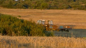 Wheat field and tractor, loopable stock video