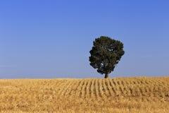Wheat Field Tree Royalty Free Stock Photo