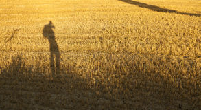 Wheat Field in Tuscany sunrise Stock Photo