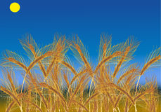 Wheat field under blue sky. Illustration with wheat field under blue sky Stock Image