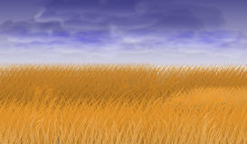 Wheat field under blue sky. Wheat field under the blue sky, vector art illustration Stock Photo
