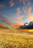 Wheat field under a scenic sky Royalty Free Stock Photos