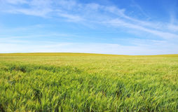 Wheat field under a  sky Stock Image