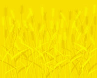 Wheat field. Vector scalable background Stock Photo