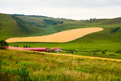 The wheat field and village Stock Photo