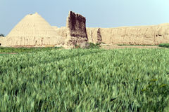 Wheat field and wall Stock Image