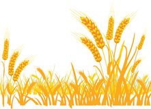 Wheat in the field on a white background. royalty free illustration