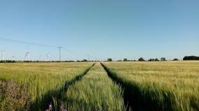 Wheat field, wind turbines, power lines stock photo