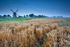 Wheat field and windmill, Groningen, Holland. Wheat field and windmillin summer morning, Groningen, Holland Royalty Free Stock Image