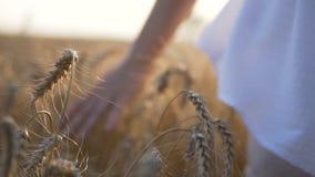 Wheat Field Woman Runing