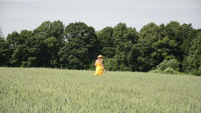 Wheat field woman walk Royalty Free Stock Images