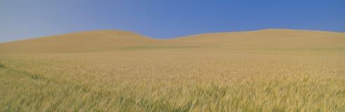 Wheat Fields Stock Photos