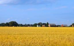 Wheat fields Stock Photo