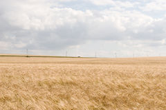 Wheat fields. A car runs through the wheat fields Royalty Free Stock Images