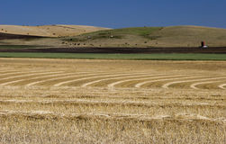 Wheat Fields. A pattern of cut wheat in the foreground, a green field, brown soil and rolling hills dotted with cattle in the background Stock Photography