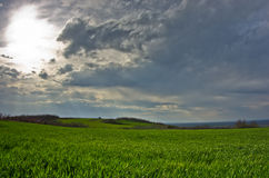 Free Wheat Fields And Orchards At Early Spring Stock Photography - 43014732