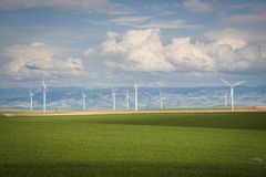 Wheat Fields And Wind Turbines Royalty Free Stock Images