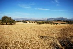 Wheat fields, Andalusia. Royalty Free Stock Photos