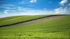 Wheat fields and arable land landscape Royalty Free Stock Image