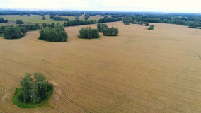 The wheat fields. Beautiful landscape from a height. Photos from a height Stock Photos