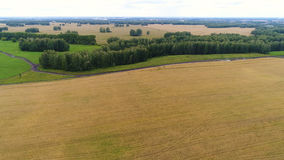The wheat fields. Beautiful landscape from a height. Photos from a height Royalty Free Stock Images
