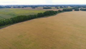 The wheat fields. Beautiful landscape from a height. Photos from a height Stock Photography