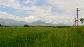 Wheat fields, clouds, june 2016, Turkey. Clouds, Wheat fields, june 2016, HD 1080 stock video footage