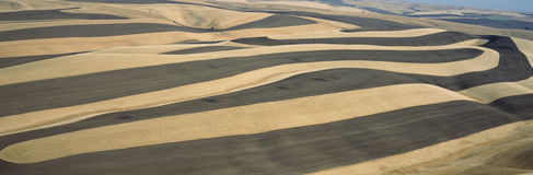 Wheat Fields and Contour Farming, S.E. Washington Stock Image